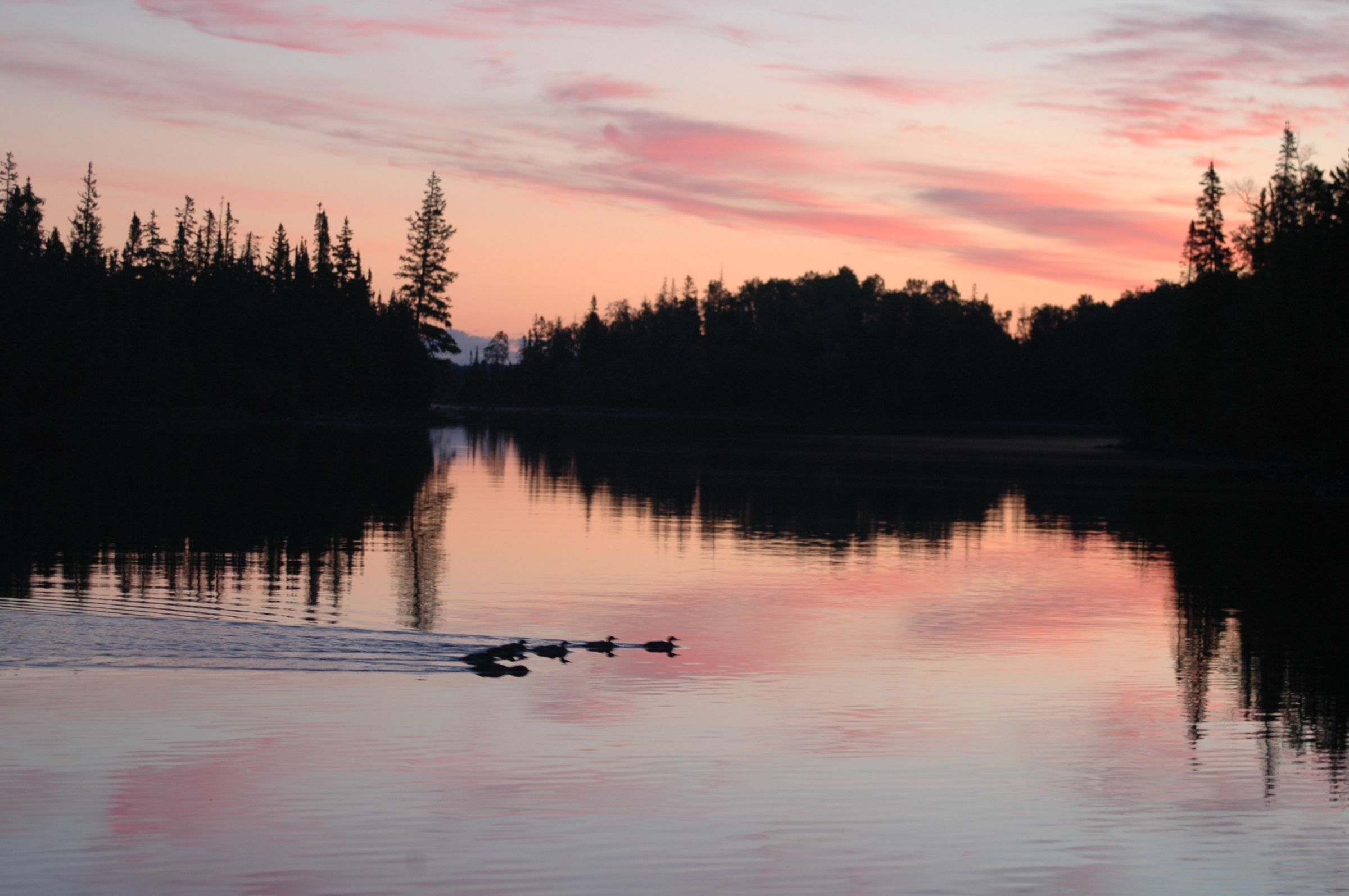 Sunset with loons