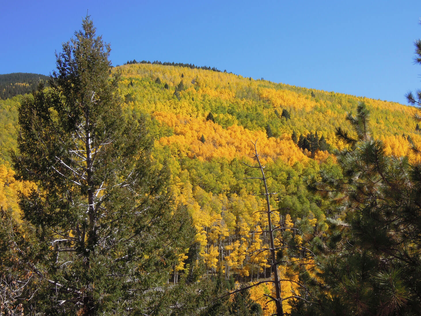 Hiking Trails in Santa Fe, New Mexico